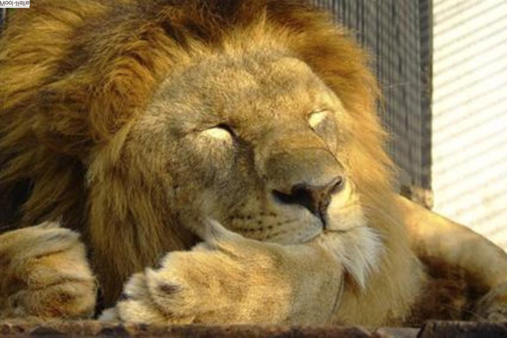 Zoo al Maglio